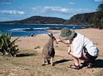 Scenic Beach Roo
